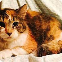 Adopt A Pet :: Rapunzel - Addison, IL