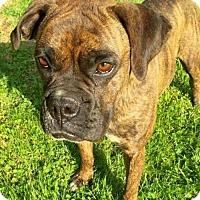 Adopt A Pet :: MIA - Smithfield, PA