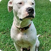 Adopt A Pet :: Lily - Gainesville, FL