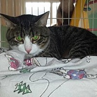 Adopt A Pet :: Cypher - Iroquois, IL