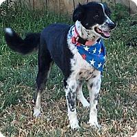 Adopt A Pet :: Bonnie - Winters, CA