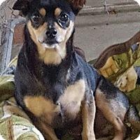 Adopt A Pet :: Tiko - Bunnell, FL