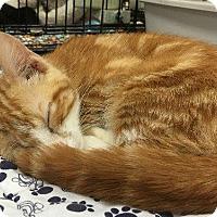 Adopt A Pet :: Templeton - Spring, TX