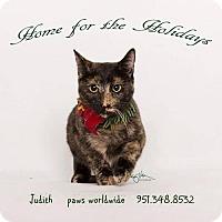 Adopt A Pet :: JUDITH - Corona, CA