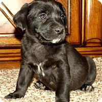 Adopt A Pet :: BAILEY/ADOPTED - PRINCETON, KY