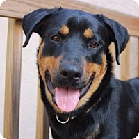 Adopt A Pet :: Brik - Tampa, FL