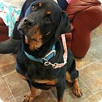 Adopt A Pet :: Elliott - Lisbon, OH