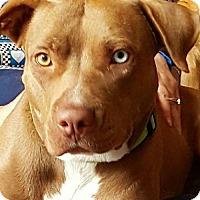 Adopt A Pet :: Sierra - ROWLETT, TX
