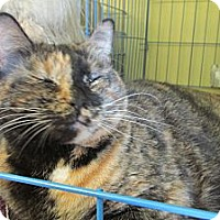 Adopt A Pet :: Snickers - Acme, PA
