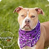 Adopt A Pet :: Cali - Medina, OH
