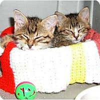 Adopt A Pet :: Hewy & Dewy - Clementon, NJ
