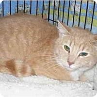 Adopt A Pet :: McCawley - Colmar, PA