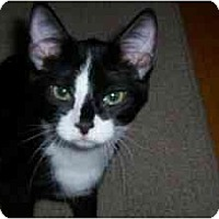 Adopt A Pet :: Tabor - Milwaukee, WI