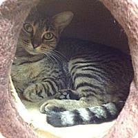Adopt A Pet :: Maxi - Lake Charles, LA