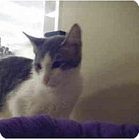Adopt A Pet :: Nanette - Brea, CA