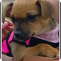 Adopt A Pet :: Bella  adopted - Nine Mile Falls, WA