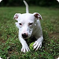 Adopt A Pet :: Wilma - Baltimore, MD