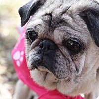 Adopt A Pet :: Miley - Austin, TX