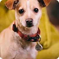 Adopt A Pet :: Lucky - Portland, OR