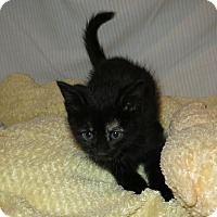 Adopt A Pet :: Sparrow - Geneseo, IL