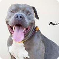Adopt A Pet :: Aiden - Seattle, WA