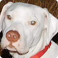 Adopt A Pet :: Little Boy - MINNEAPOLIS, KS