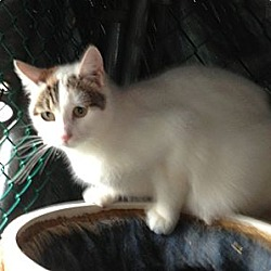 Photo 2 - Domestic Shorthair Cat for adoption in Wanaque, New Jersey - MULTIPLE CATS