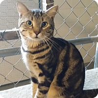 Adopt A Pet :: Marbles - Orlando, FL