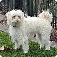 Adopt A Pet :: Ray - Costa Mesa, CA