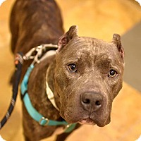 Adopt A Pet :: Carlee - Los Angeles, CA