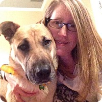 Adopt A Pet :: Josie - Nashua, NH