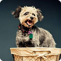 Adopt A Pet :: Stormy - San Antonio, TX