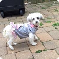 Adopt A Pet :: Juliette - N. Babylon, NY