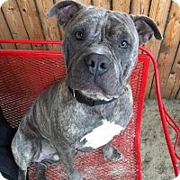 Adopt A Pet :: Lionel - Mt Vernon, NY