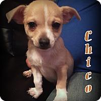 Adopt A Pet :: Chico - Denver, NC
