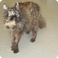 Adopt A Pet :: Pandora - Toledo, OH