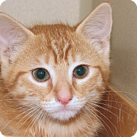 Adopt A Pet :: Tobin - Ruidoso, NM