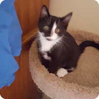Adopt A Pet :: Bently - Colmar, PA