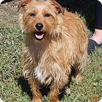 Adopt A Pet :: Ace (14 lb) Great Family Pet! - Williamsport, MD