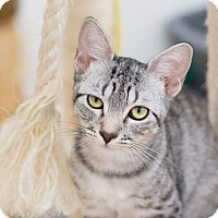 Adopt A Pet :: Aurora - Fountain Hills, AZ