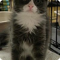 Adopt A Pet :: Tootsie Roll - Sacramento, CA
