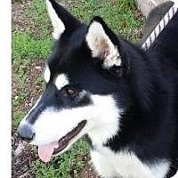 Adopt A Pet :: OWEN - Red Bluff, CA