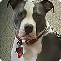 Adopt A Pet :: Lucy, I am a service dog - Sacramento, CA