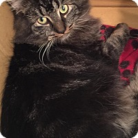 Adopt A Pet :: Joe - Covington, KY