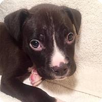 Adopt A Pet :: Tigger - Toledo, OH