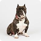 Adopt A Pet :: Nikki