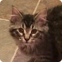 Adopt A Pet :: Olivia - McHenry, IL