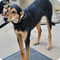 Adopt A Pet :: Marci - Orange, CA