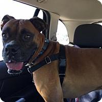 Adopt A Pet :: Frodo - Hurst, TX
