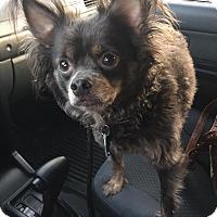 Adopt A Pet :: Rex - Virginia Beach, VA